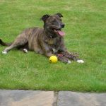 Jess the Pinnacle loyal dog