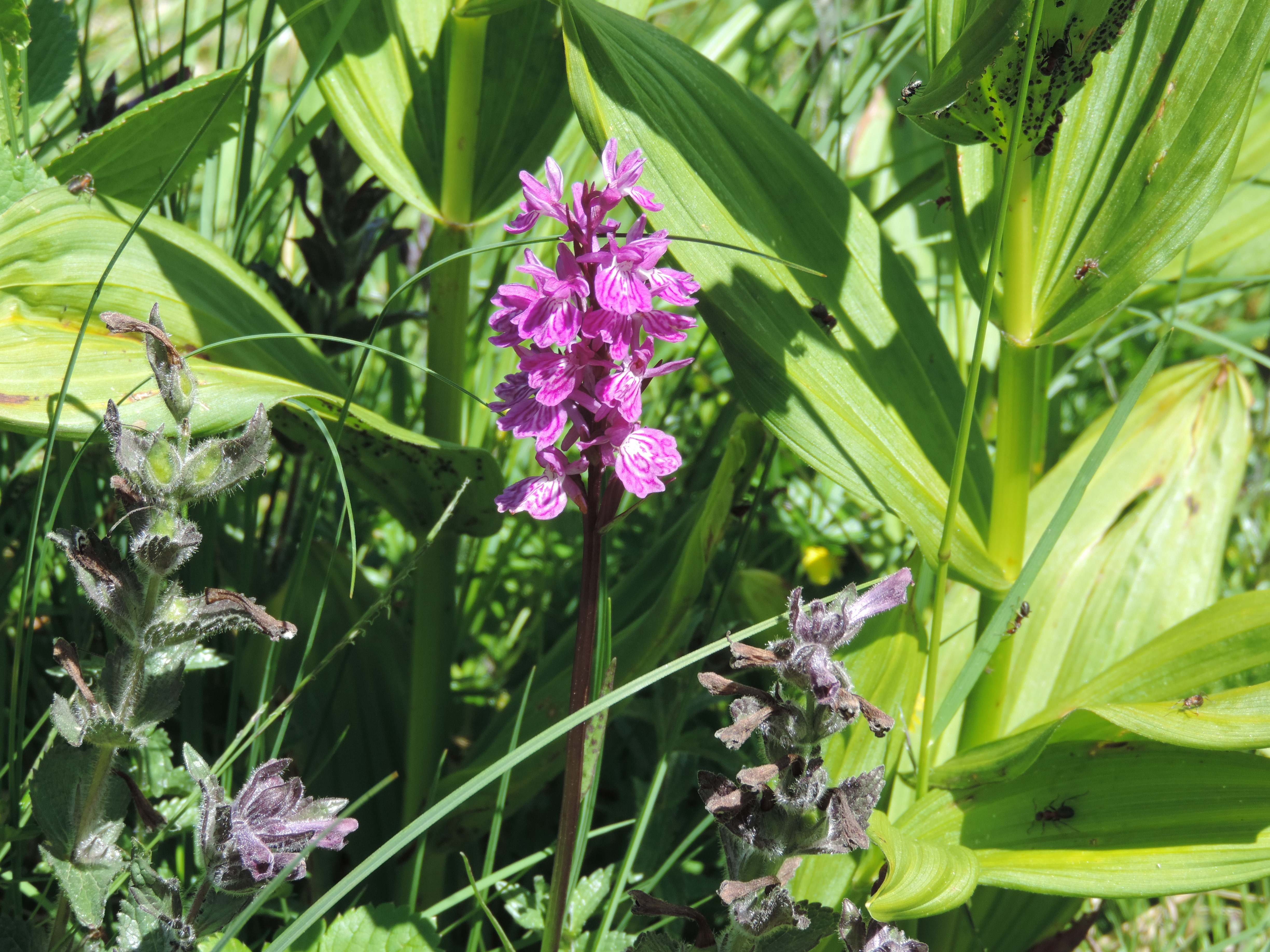 image: orchids are always seen on a pinnacle walking holiday