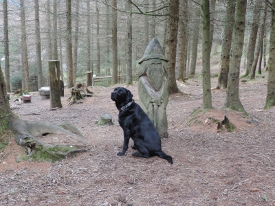 image: Whinlatter Forest is a great place for dog walking