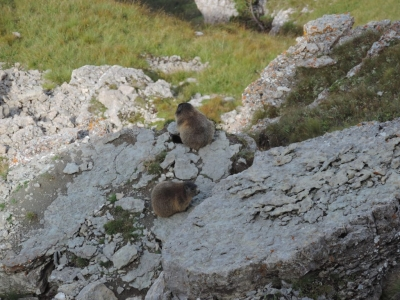 image: marmots at the top of seceda