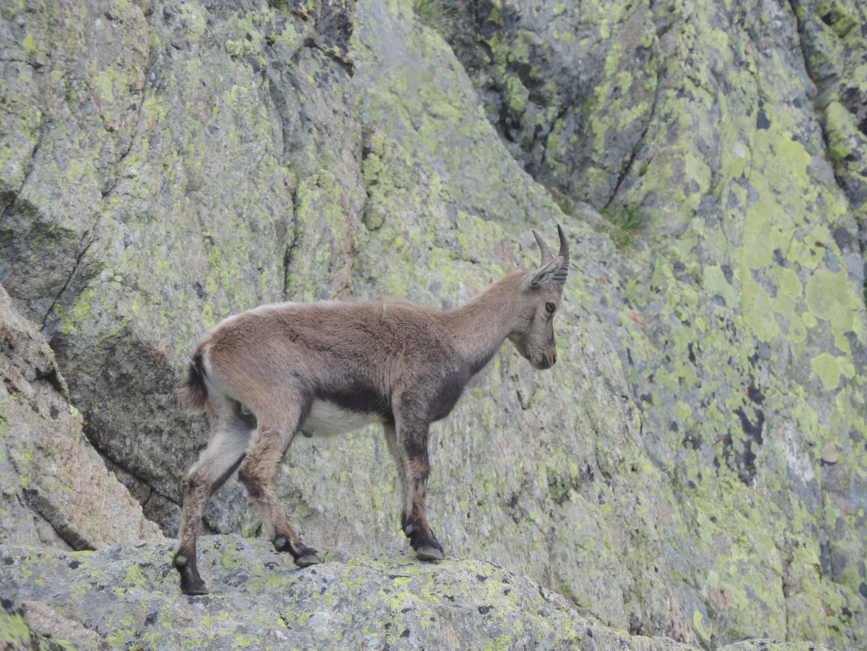 image: seen at Lac Cornu