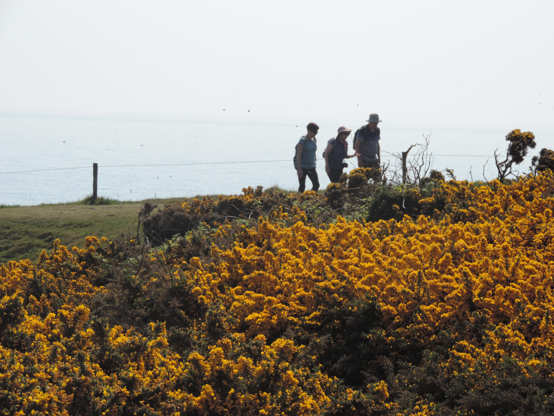 image: Northumberland Coast Path.