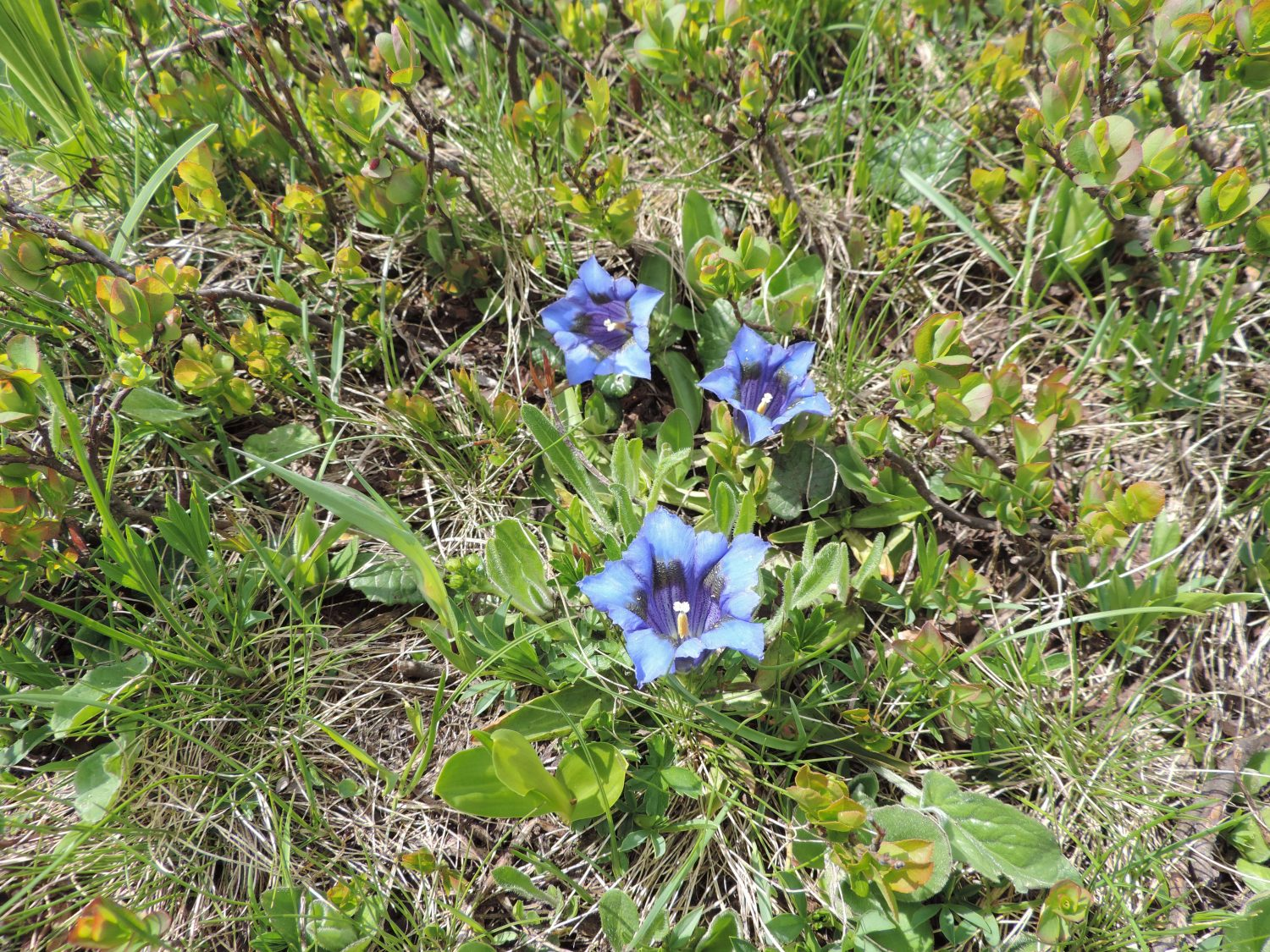 image: a favourite flower on a french alps walking holiday