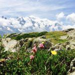 La Tour covered in an alpine meadow